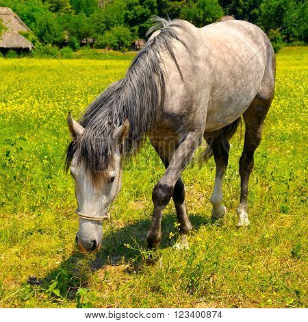 A old horse grazing in a meadow