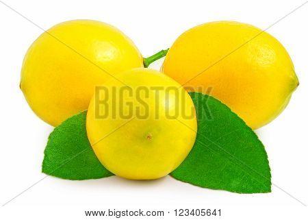 Three lemons on the white background isolated.