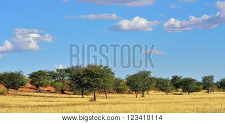 Beautiful landscape in the Kalahari desert at sunset time Namibia Africa