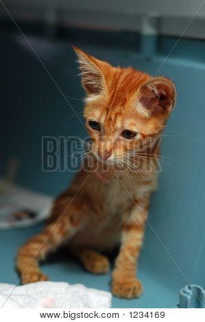 drei Beinen Kätzchen
