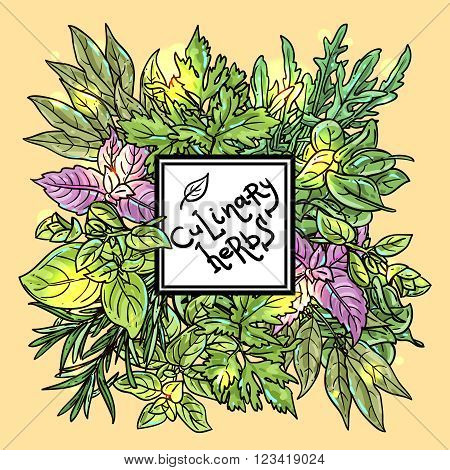 Beautiful hand drawn vector  illustration of culinary herbs