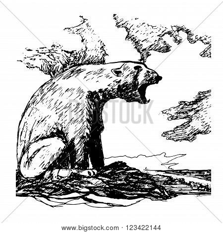picture polar bear growls loudly on the beach shading ink sketch hand drawn vector illustration