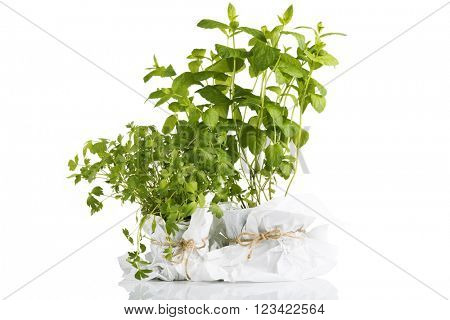 Herbs plants in pots isolated on white background
