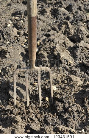Preparing vegetable plot soil by digging with a garden fork.