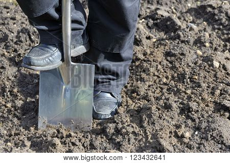 Gardener preparing vegetable plot soil by digging with a garden spade.
