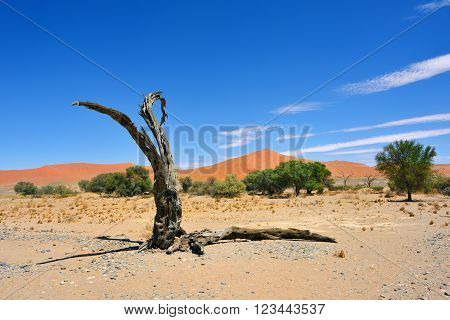 Namib-naukluft National Park, Namibia, Africa.