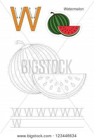 Vector exercise illustrated alphabet. Learn handwriting. Page to be traced. Complete english alphabet. Tracing worksheet for letter W