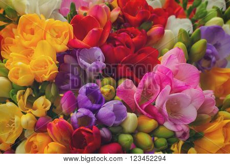 Bunch of fresh freesia flowers close up background, retro toned