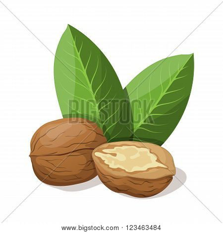 Walnuts with leafs isolated on white. Vector illustration.