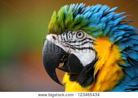 Portrait of beautiful colorful parrot on blur background