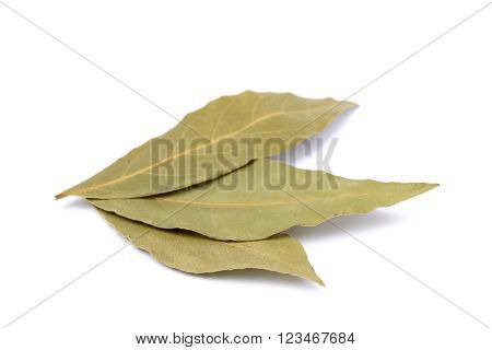Spices bay leaves isolated on white background.