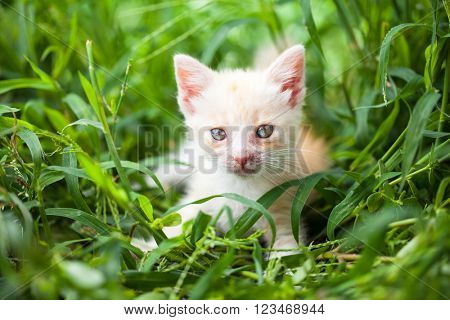 young cat in the grass