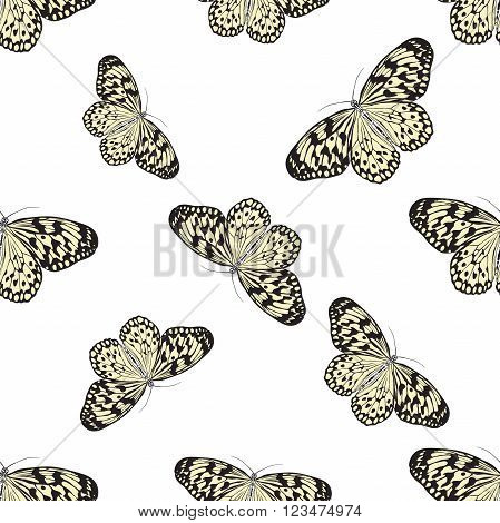 Seamless pattern with butterfly Idea Leuconoe. Paper Kite .    hand-drawn paperkite butterfly . Vector illustration