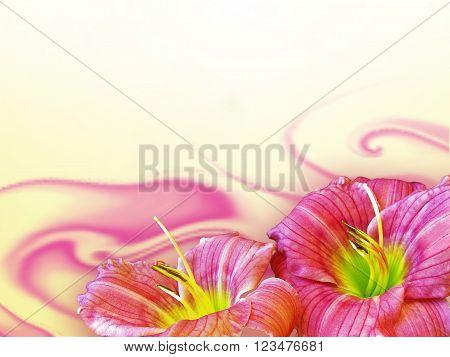 close up hemerocallis flowers on yellow background