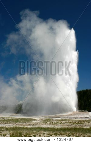 Old Faithful Tall