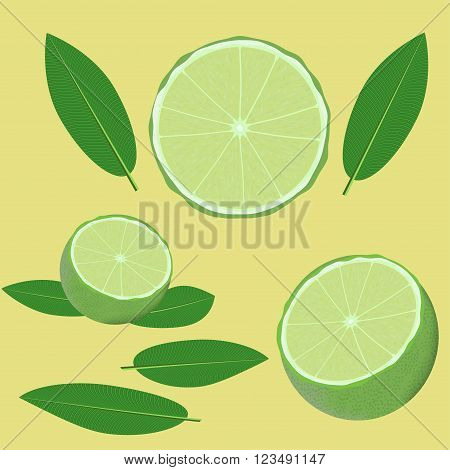green lime and leaves vector illustration elements