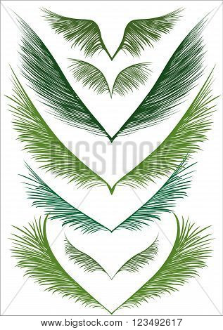 a set of green palm fronds on white background