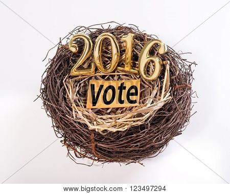 New born 2016 with vote paper on nest