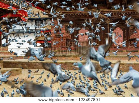 Pigeons taking off at Kathmandu Durbar Square, Nepal