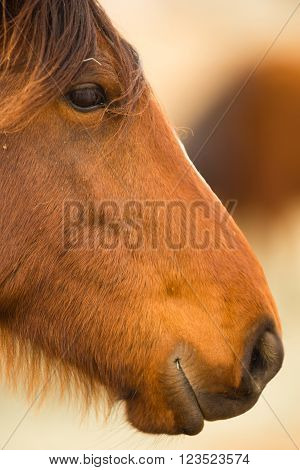 Wild Horse Face Portrait Oregon Outdoor Horses
