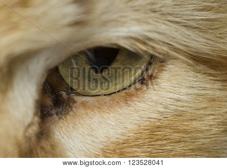 Cat eye closeup