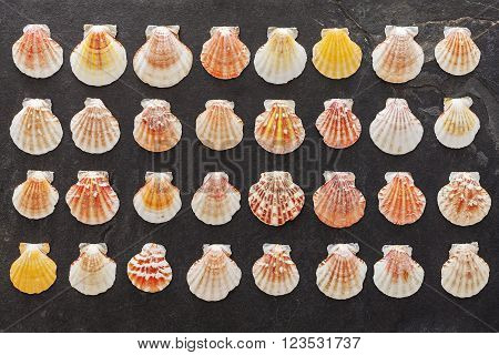 Many colorful shells on black stone background.