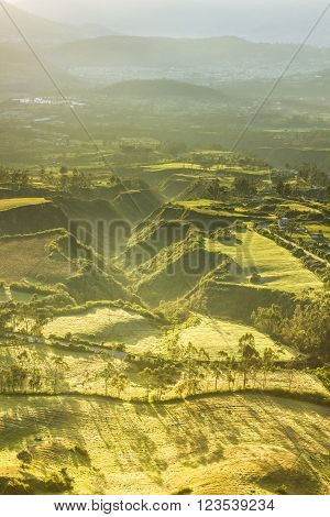 yellow morning lighting of agriculture field with green ravine and long shadows of trees, from above, aerial view
