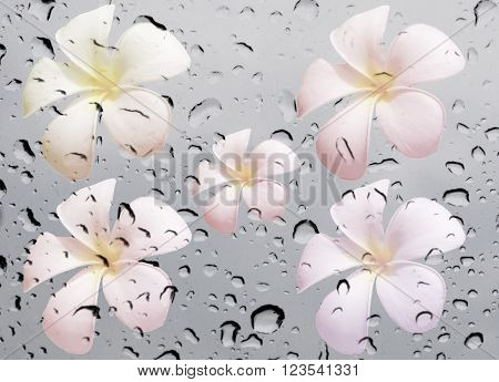 Frangipani Flower On Waterdrop On Glass Texture Background
