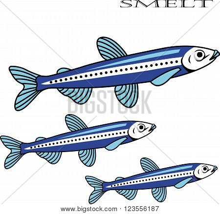 Smelt color cartoon vector illustration. Smelt fishes on white background. Smelt vector. Smelt illustration. Smelt fish isolated vector.