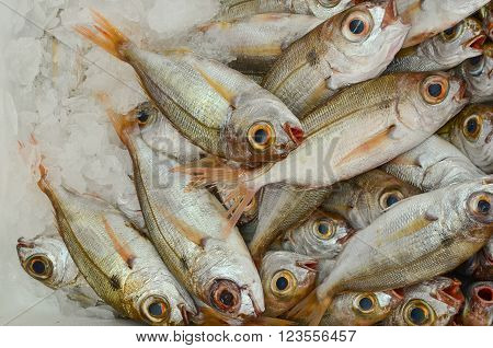 Fish market freshly caught sea fish on ice ready for sale