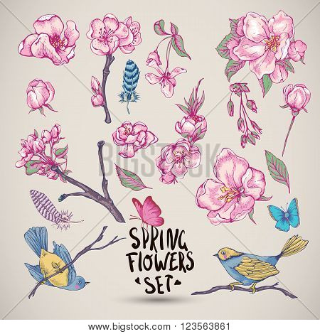 Set of Spring Nature elements, sprigs separately leaves flower, pink blooming branches cherry, peach, pear, sakura, apple trees birds feathers and butterflies, Vector isolated botanical illustration