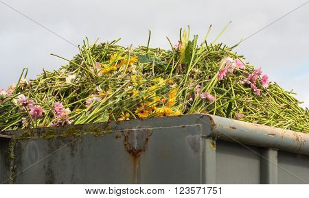 Closeup of a heap of disapproved gerbera flowers in a gray steel waste container.