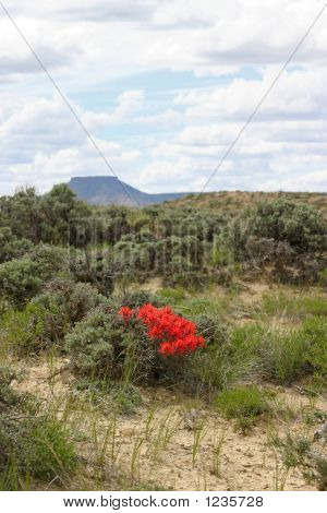 Wyoming Paintbrush And Pilot Butte