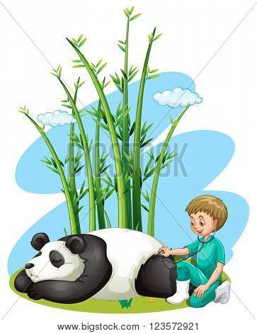 Vet checking up panda illustration