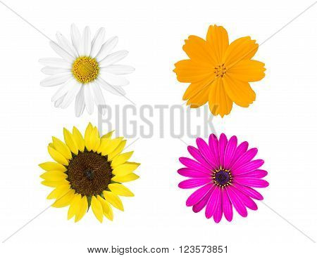 collection colorful flowers isolated on white background.