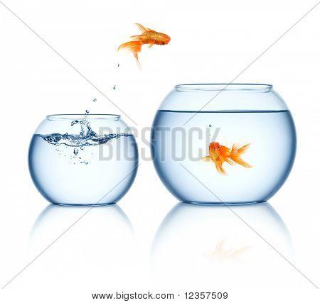 Um peixinho pulando para fora do aquário