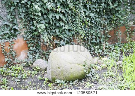 Wall overgrown with ivy green with a large round stone