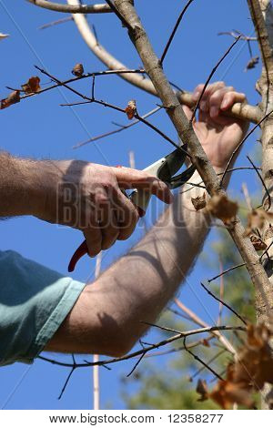 Seasonal Pruning