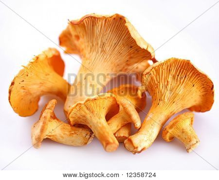mushrooms ; Objects on white background