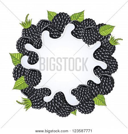 Yogurt splash isolated on blackberries. Milk splash, blackberries yogurt. Yogurt Packaging Design Template. Vector illustration.