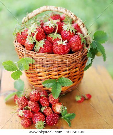 Erdbeere;