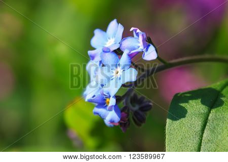 Beautiful spring nots,floral background,macro photography,small depth of field ** Note: Soft Focus at 100%, best at smaller sizes