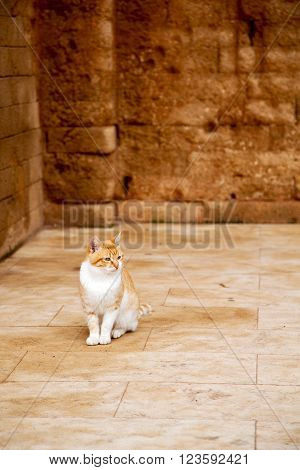 Alone Cat In Africa  Background