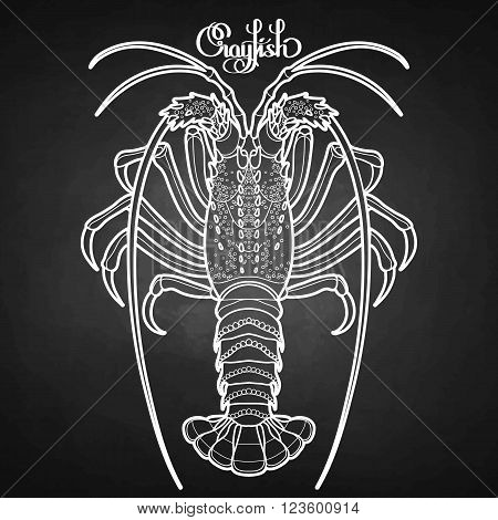 Graphic vector crayfish drawn in line art style. Spiny or rocky lobster. Sea and ocean creature isolated on chalkboard. Top view. Seafood element. Coloring book page design