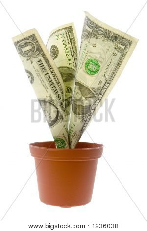 Us Money Plant