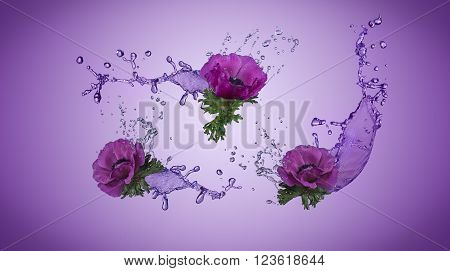 Purple anemones with water splashes on purple background