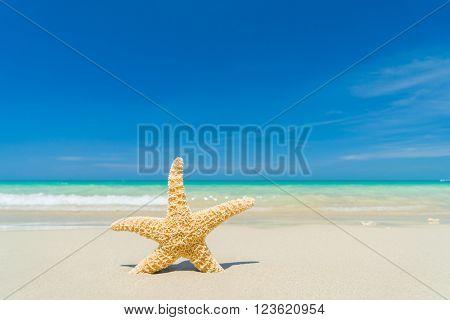 Caribbean starfish on the sandy  beach
