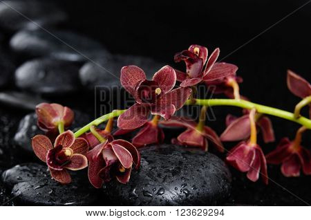 branch red orchid on therapy stones