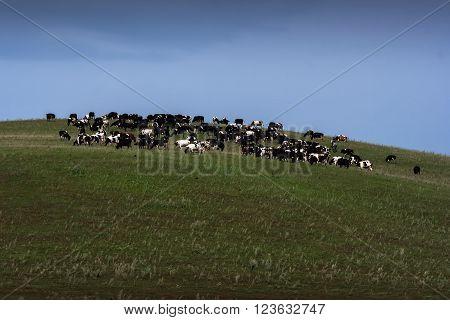 herd of animals on the planet horizon