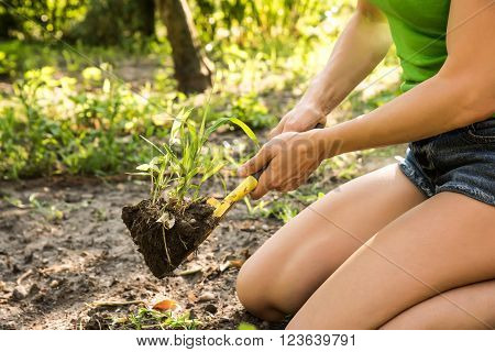 A young beautiful woman working in a garden.